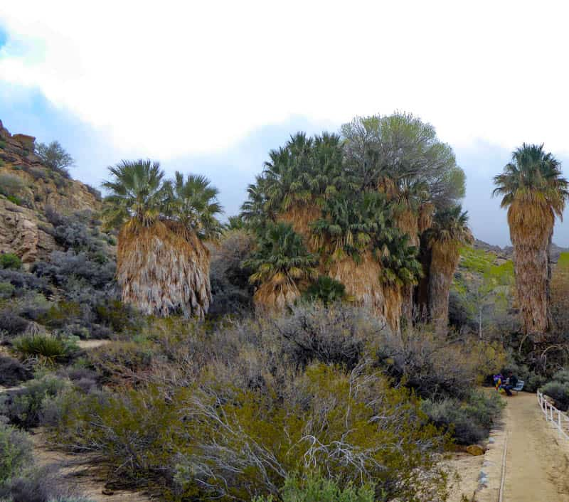 View from Trail Cottonwood Spring Oasis Joshua Tree